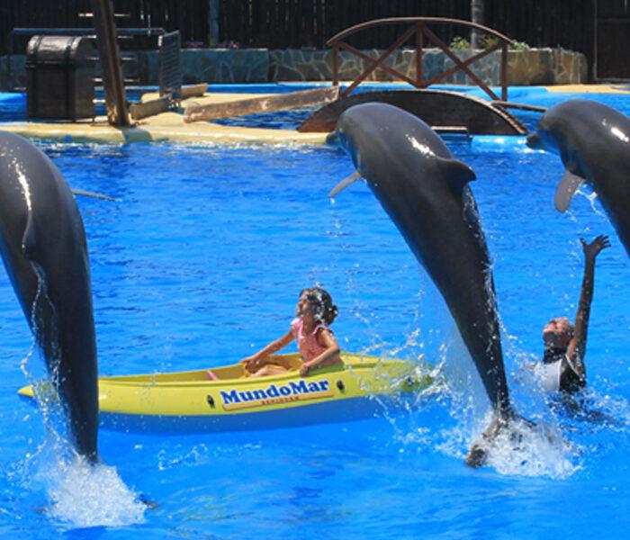 delfines_show_4_4_6